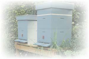 Een bijenkast zelf maken